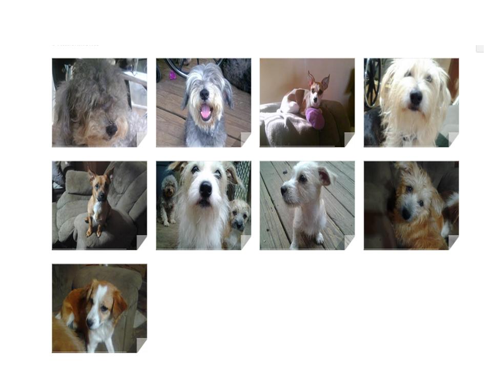 Lisa's doggies