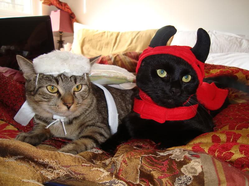 """Jen's """"Otie & Zorro"""""""
