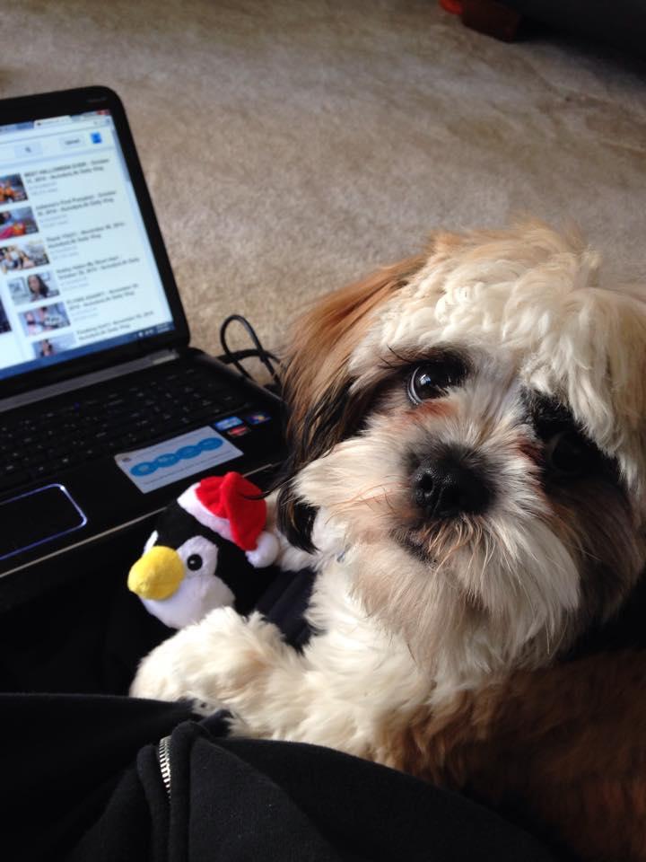 Teddy Loves YouTube